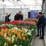 Tulip Trade Event 2019_BOT Flowerbulbs