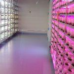 Fitotron_nowe laboratorium in vitro_Plantin 2019