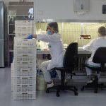 Rozlewanie pożywki, która służy do uprawy roślin w kulturach in vitro_nowe laboratorium in vitro_Plantin 2019