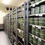 Chłodnia w laboratorium firmy Plantin