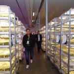 Plantin 2019_Zwiedzanie pokojów wzrostowych (aklimatyzacyjnych) firmy Plantin - oddziału w Muniakowicach