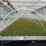 Plantin-2019_Ukorzenianie sadzonek w koreczkach torfowych_w multiplatach