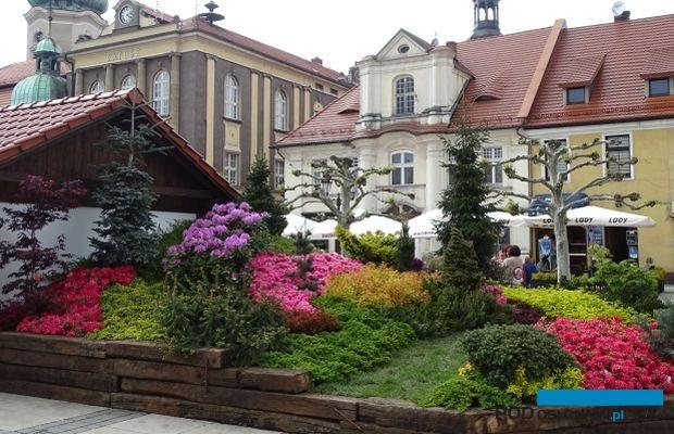 Przez trzy majowe dni zabytkowy rynek w Pszczynie gościł Ogrody Daisy