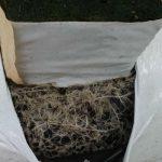 Korzenie ogórka przerastające matę uprawową z węgla brunatnego