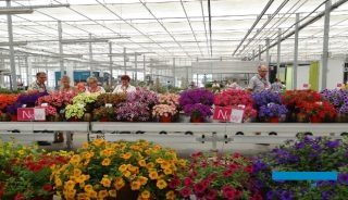 Dni Otwarte firmy Vitroflora