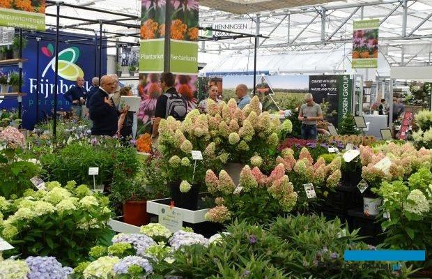 Konkurs nowości roślinnych stanowi jedną z corocznych atrakcji targów Plantarium; zgłoszone do niego, w tym wyróżnione medalami odmiany skupiają uwagę zwiedzających, fot. A. Cecot