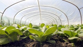 Myślisz o nowym sezonie? Zadbaj o glebę pod uprawę roślin już teraz!