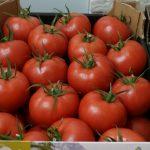 Pomidor malinowy Fujimaru