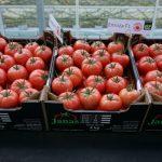 Pomidory malinowe Enroza