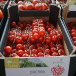 Pomidor typu cherry pod numerem DRC564