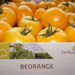 BeOrange - wielkoowocowy pomidor mięsisty o wyjątkowo dobrym smaku