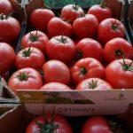 DRTH4821 - obiecująca nowość w asortymencie pomidorów malinowych