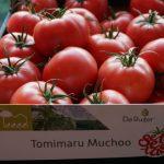 Pomidor malinowy Tomimaru Muchoo