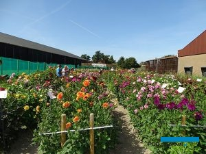 Holland Dahlia Event-2019_De Meulder_