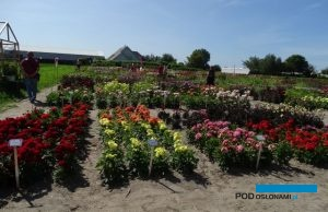Holland Dahlia Event-2019_CNB_