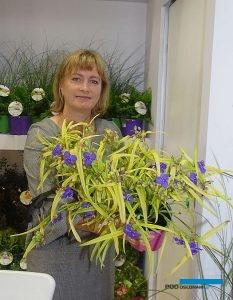 Barbara Ciempiel ze szkółki Radzis prezentuje trzykrotkę (Tradescantia) 'Sweet Kate'