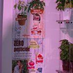 Trendy ze stoiska grupy Vegecom (pawilon poświęcony handlowi detalicznemu)_Salon du Vegetal 2019