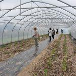 Dużym zainteresowaniem cieszyła się proekologiczna uprawa papryki ostrej z widocznym przedplonem w formie ściółki, fot. I. Maczek
