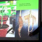 Dr Agnieszka Stępowska podczas wykładu zwracała uwagę m.in. na prawidłowe cechy rozsady papryki