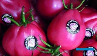 Malinowe owoce Rosamundy wyróżniają się kształtem i smakiem
