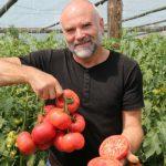 Wiesław Korecki z Rzeczycy uprawia pomidory malinowe odmiany Manistella