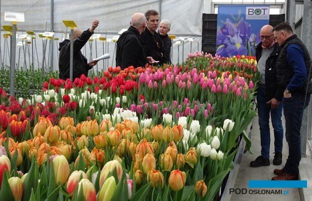 Tulip Trade Event to marcowe dni otwarte 13 firm holenderskich
