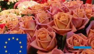 Branża roślin ozdobnych liczy na unijną pomoc