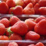 3. Owoce 'Elsanty', najpopularniejszej odmiany uprawianej w szklarniach