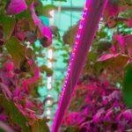 Do doświetlania międzyrzędowego wykorzystano lampy Philips GreenPower LED interlighting