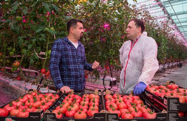 Łukasz Budyta -właściciel plantacji pomidorów doświetlanych lampami LED (z lewej) - oraz Michał Szymczak z firmy Signify, z której pochodzą lampy LED
