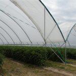 Wysoki, zblokowany tunel dedykowany do uprawy malin