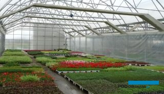 Jedna z naw tunelu zblokowanego w gospodarstwie Diant-Pol Polska (migawka z końca kwietnia), które specjalizuje się w produkcji sezonowych roślin ozdobnych, zwłaszcza przeznaczonych do miejskich nasadzeń, fot. A. Cecot