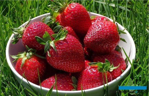 Truskawki to najbardziej wyczekiwane owoce sezonowe