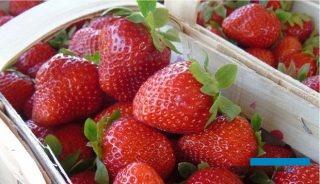 Na rynku są już dostępne truskawki z upraw szklarniowych i tunelowych