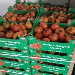 Pomidory - Beata i Grzegorz Oszust