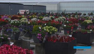 W 2020 roku odwołano FlowerTrials, a wiele pokazów nowych odmian roślin balkonowo-rabatowych odbędzie się wirtualnie (np. w firmie Beekenkamp),