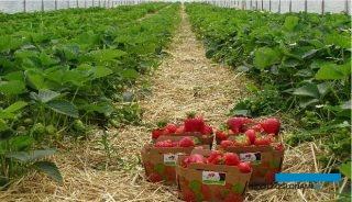 Mini projekt doświadczalny w Gospodarstwie Rolnym Maruszewski