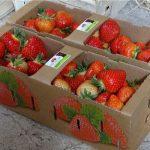 Owoce sprzedawane bezpośrednio z gospodarstwa są oferowane w efektownych opakowaniach