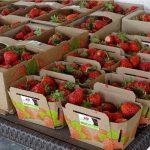 W takich opakowaniach owoce oferowane są w sprzedaży bezpośrednio z gospodarstwa