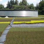 Nowy zbiornik na wodę deszczową w gospodarstwie Meres (na 1. planie - wrzosy pączkowe) , fot. A.Cecot