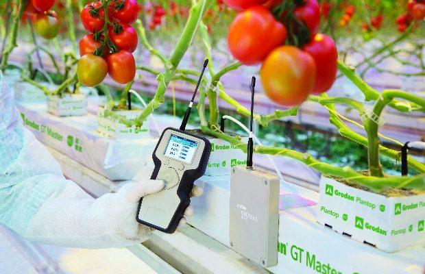 System GroSens MultiSensor w uprawie pomidorów
