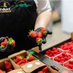 Do przygotowania dań wykorzystano truskawki i maliny z farmy OVOC