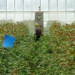 Samojezdny opryskiwacz służy do ochrony roślin w okresach, gdy nie jest wystarczająca ochrona biologiczna,_Aneta-Haba