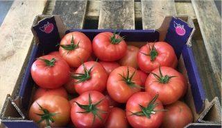 Kawaguchi RZ to pomidor klasy premium o wyjątkowym smaku i jakości owoców
