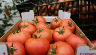 Owoce pomidora malinowego Maluno
