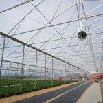 Na początku września w zakładzie ogrodniczym Royal Plant kończono prace dotyczące budowy i wyposażenia drugiego tunelu zblokowanego z firmy Agro-Sur