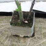 Podłoże z wełny skalnej to doskonałe środowisko do rozwoju sytemu korzeniowego roślin