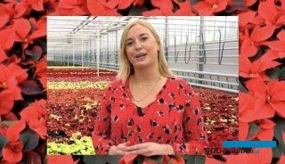 Felicia van der Weiden była gospodynią wirtualnych pokazów odmian firmy Syngenta Flowers, fot. A. Cecot (print screen)