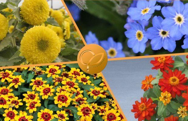 Złote Medale Fleuroselectu 2022 przypadły czterem nowym odmianom roślin ozdobnych, fot. Fleuroselect