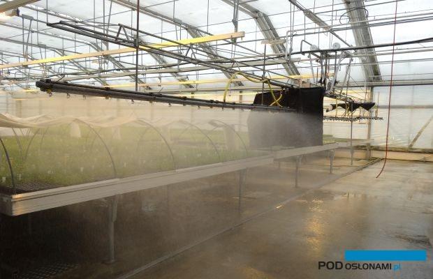 W szklarniach firmy Denis-Plants w Beervelde aklimatyzuje się rośliny ozdobne rozmnożone in vitro, fot. A. Cecot